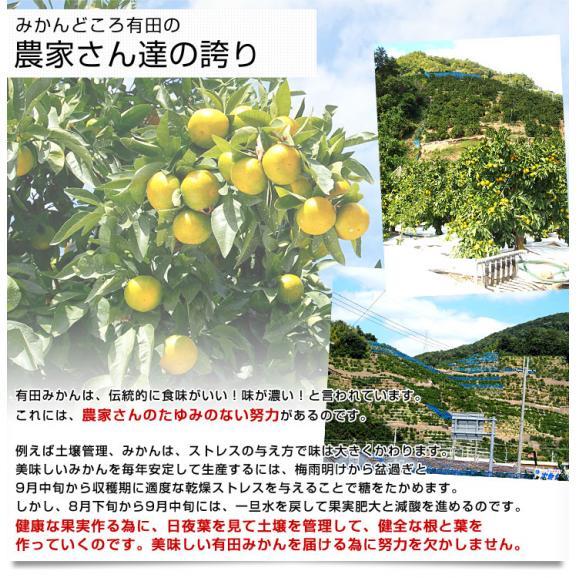 和歌山県より産地直送 JAありだ ゆら早生みかん 5キロ SからSSサイズ 蜜柑 ミカン 送料無料06