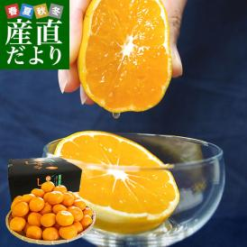 最高級果実!栽培技術を駆使して育てたプレミアム品!