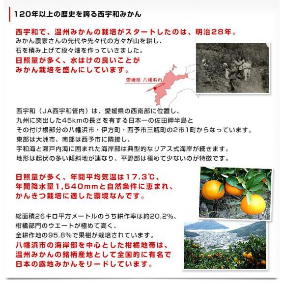 愛媛県産 JAにしうわ 三瓶共撰 プレミアム西宇和みかん しずる(雫琉) LからSサイズ 5キロ(40玉から60玉) 送料無料 蜜柑 ミカン06