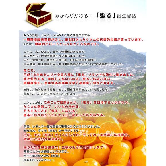 愛媛県より産地直送 JAにしうわ みつる共撰 プレミアム西宇和みかん 蜜る(みつる) LからSサイズ 4キロ(35玉から50玉) 送料無料 にしうわみかん 蜜柑 ミカン04