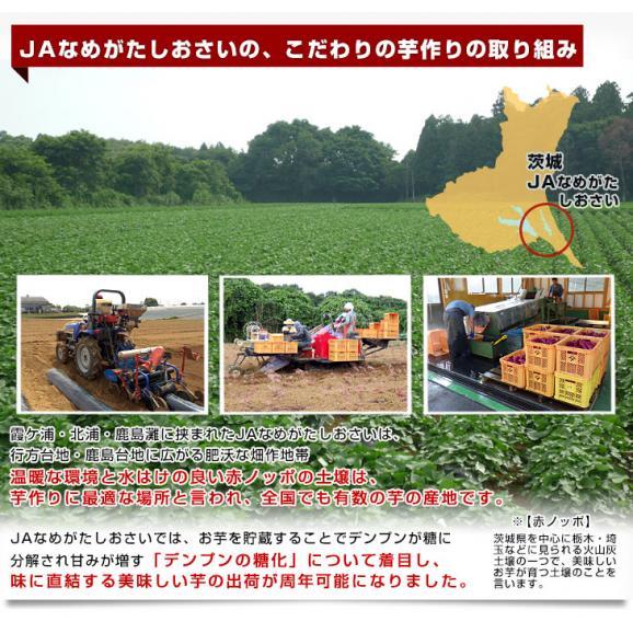 茨城県より産地直送 JAなめがたしおさい さつまいも「紅優甘 (べにゆうか)」 Sサイズ 5キロ(25本から30本) 送料無料 さつま芋 サツマイモ 薩摩芋05