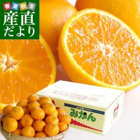 福岡県より産地直送 JAみなみ筑後 南津海(なつみ) 秀品 LからSサイズ 約5キロ 柑橘 オレンジ