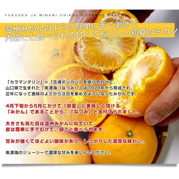 福岡県より産地直送 JAみなみ筑後 南津海(なつみ) 秀品 LからSサイズ 約5キロ 柑橘 オレンジ 04
