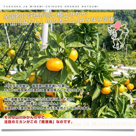 福岡県より産地直送 JAみなみ筑後 南津海(なつみ) 秀品 LからSサイズ 約5キロ 柑橘 オレンジ 05