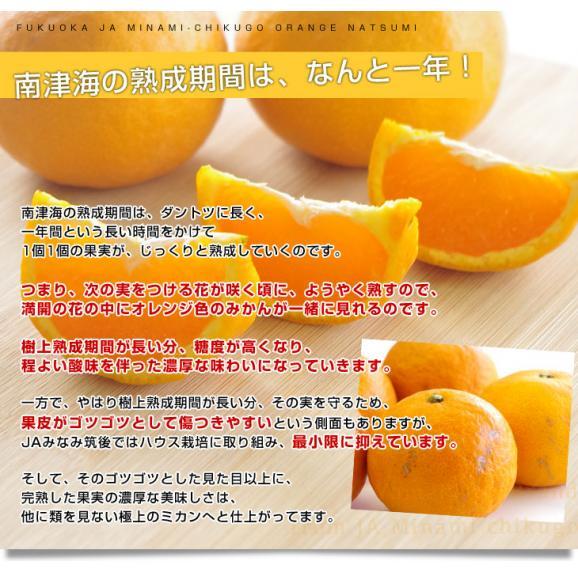 福岡県より産地直送 JAみなみ筑後 南津海(なつみ) 秀品 LからSサイズ 約5キロ 柑橘 オレンジ 06