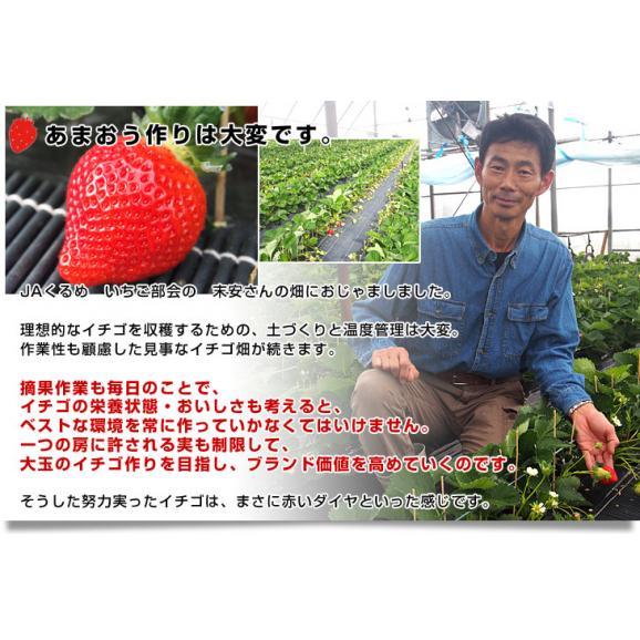 福岡県より産地直送 JAくるめ あまおういちご DX:ギフト用デラックス 約540g(270g×2パック) 送料無料 苺 いちご イチゴストロベリー04