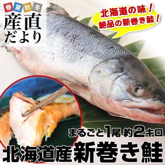 北海道から産地直送 北海道産 新巻き鮭(甘塩) まるごと1尾 2キロ 送料無料 さけ サケ01
