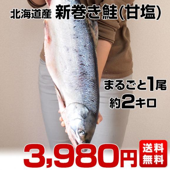 北海道から産地直送 北海道産 新巻き鮭(甘塩) まるごと1尾 2キロ 送料無料 さけ サケ02