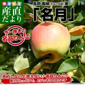 送料無料 長野県より産地直送 JAながの 飯綱地区 「名月」 5キロ(13玉から20玉) 林檎 りんご リンゴ