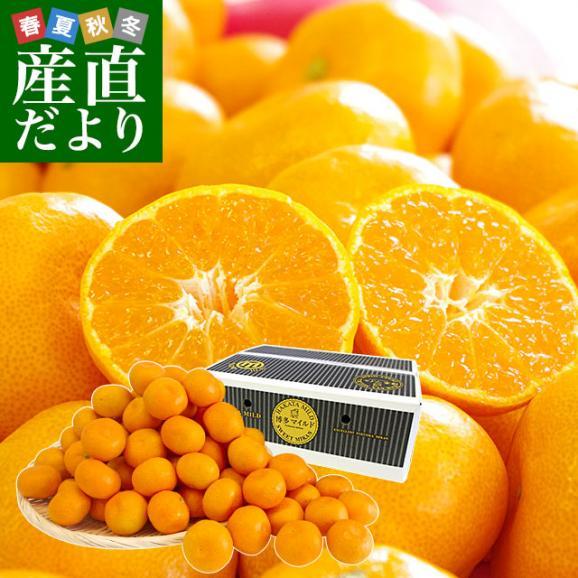 福岡県より産地直送 JAみなみ筑後 博多マイルド SSサイズ 約5キロ(80玉前後)送料無料 蜜柑 みかん01