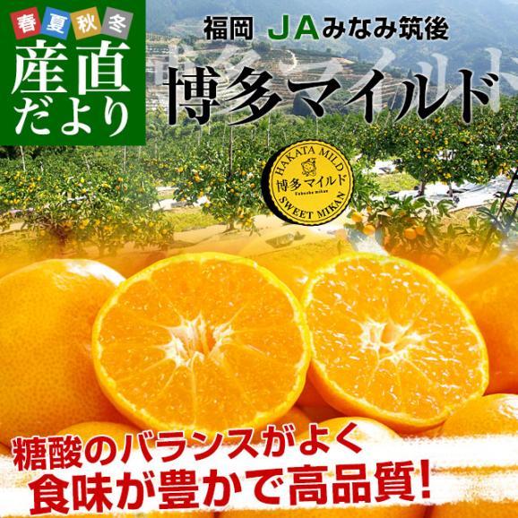 福岡県より産地直送 JAみなみ筑後 博多マイルド SSサイズ 約5キロ(80玉前後)送料無料 蜜柑 みかん02