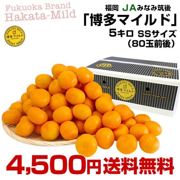 福岡県より産地直送 JAみなみ筑後 博多マイルド SSサイズ 約5キロ(80玉前後)送料無料 蜜柑 みかん03