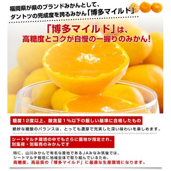 福岡県より産地直送 JAみなみ筑後 博多マイルド SSサイズ 約5キロ(80玉前後)送料無料 蜜柑 みかん04