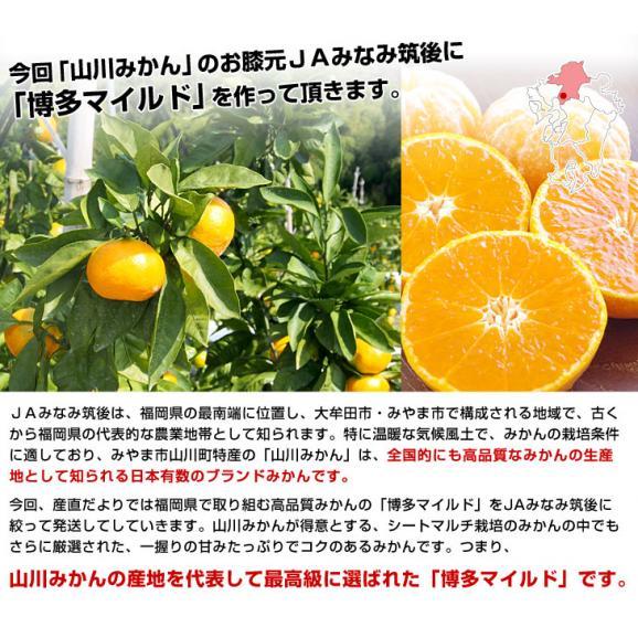 福岡県より産地直送 JAみなみ筑後 博多マイルド SSサイズ 約5キロ(80玉前後)送料無料 蜜柑 みかん05