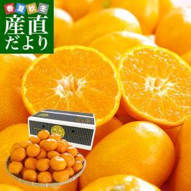 福岡県より産地直送 JAみなみ筑後 博多マイルド MからSサイズ 約5キロ (50玉から60玉前後)送料無料 蜜柑 ミカン