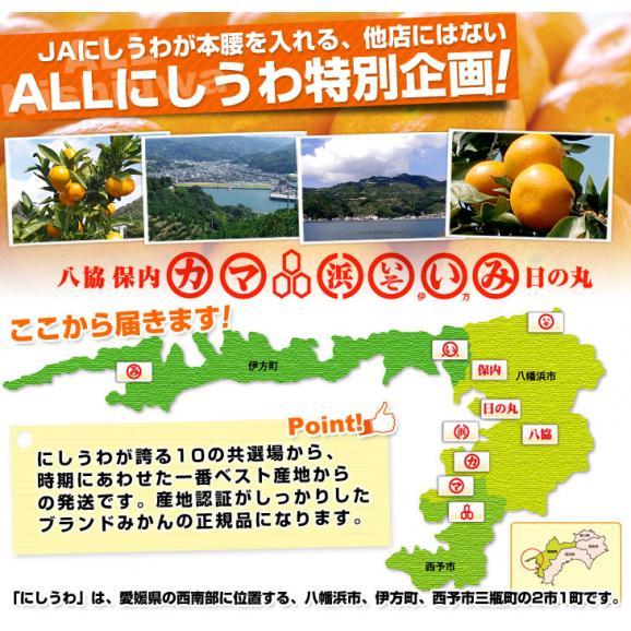 愛媛県より産地直送 JAにしうわ 西宇和みかん LからSサイズ 5キロ (約40から60玉) 送料無料 ミカン 蜜柑 御歳暮 ギフト04