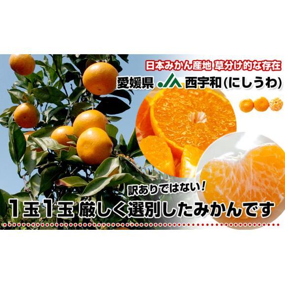 愛媛県より産地直送 JAにしうわ 西宇和みかん LからSサイズ 5キロ (約40から60玉) 送料無料 ミカン 蜜柑 御歳暮 ギフト05