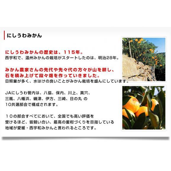 愛媛県より産地直送 JAにしうわ 西宇和みかん LからSサイズ 5キロ (約40から60玉) 送料無料 ミカン 蜜柑 御歳暮 ギフト06