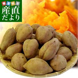 送料無料 鹿児島県より産地直送 種子島産「安納芋」約5キロ さつまいも 唐芋 からいも カライモ