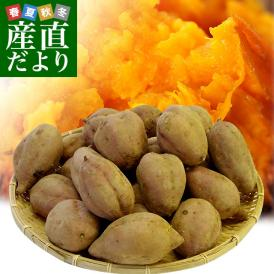 鹿児島県より産地直送 種子島産「安納芋」約3キロ さつまいも 唐芋 からいも カライモ 送料無料