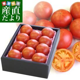 熊本県より産地直送 JAやつしろ フルーツトマト ロイヤルセレブ 約1キロ LからSサイズ(9から16玉) とまと