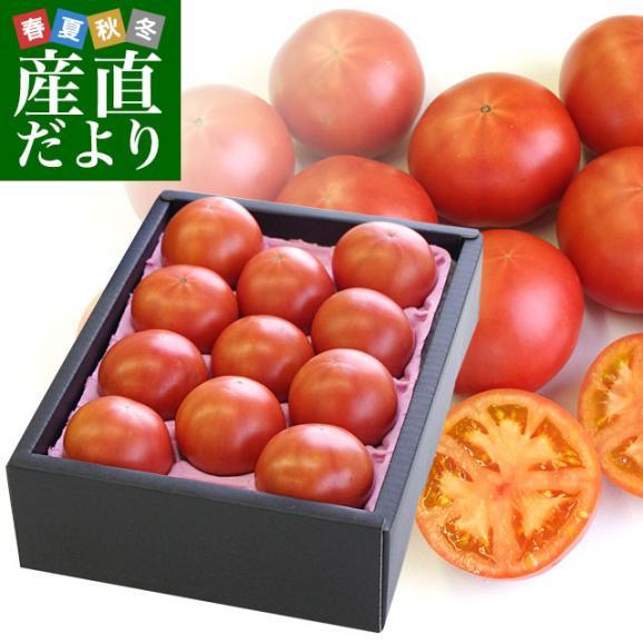 熊本県より産地直送 JAやつしろ フルーツトマト ロイヤルセレブ 約1キロ LからSサイズ(9から16玉) とまと01