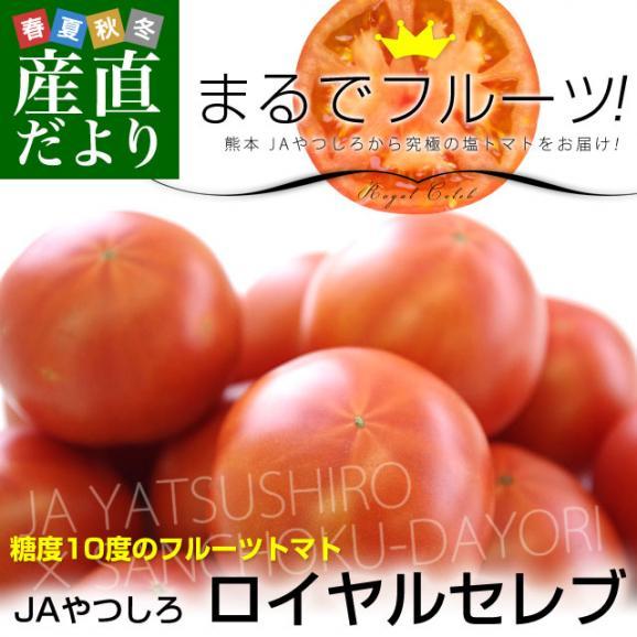 熊本県より産地直送 JAやつしろ フルーツトマト ロイヤルセレブ 約1キロ LからSサイズ(9から16玉) とまと02