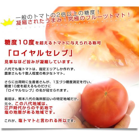 熊本県より産地直送 JAやつしろ フルーツトマト ロイヤルセレブ 約1キロ LからSサイズ(9から16玉) とまと04