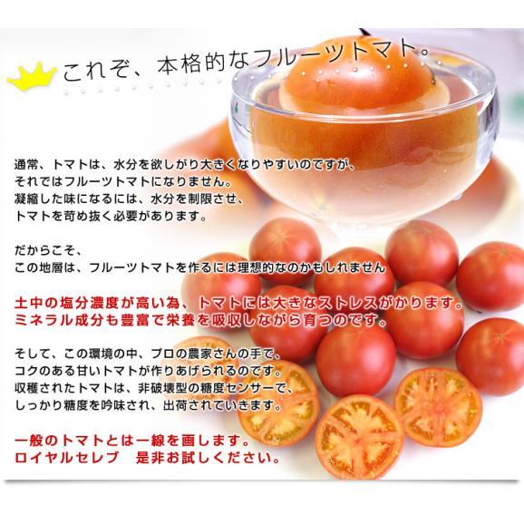 熊本県より産地直送 JAやつしろ フルーツトマト ロイヤルセレブ 約1キロ LからSサイズ(9から16玉) とまと05