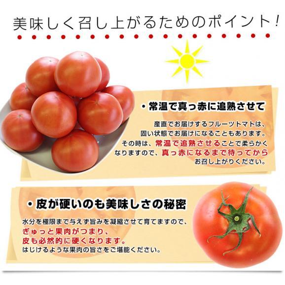 熊本県より産地直送 JAやつしろ フルーツトマト ロイヤルセレブ 約1キロ LからSサイズ(9から16玉) とまと06