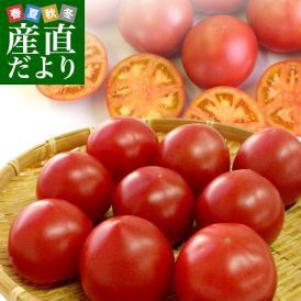 送料無料 熊本県より産地直送 JAやつしろ フルーツトマト ロイヤルセレブ 約1キロ Lサイズ (9玉) とまと