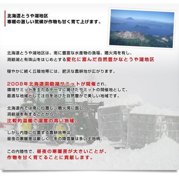 北海道より産地直送 JAとうや湖 雪蔵貯蔵じゃがいも (男爵) Lサイズ 10キロ  送料無料 芋 ジャガイモ 馬鈴薯06