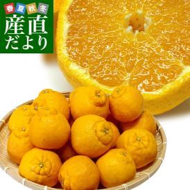 熊本県から産地直送 JAあまくさ ハウス栽培デコポン 2L 5キロ (20玉) でこぽん しらぬひ 不知火 天草 送料無料