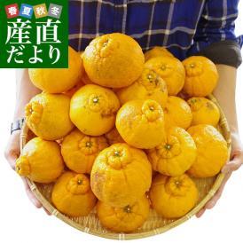熊本県より産地直送 JAあまくさ 訳あり熊本しらぬひ 大小込 5キロ 不知火 しらぬい 柑橘 オレンジ 天草 送料無料