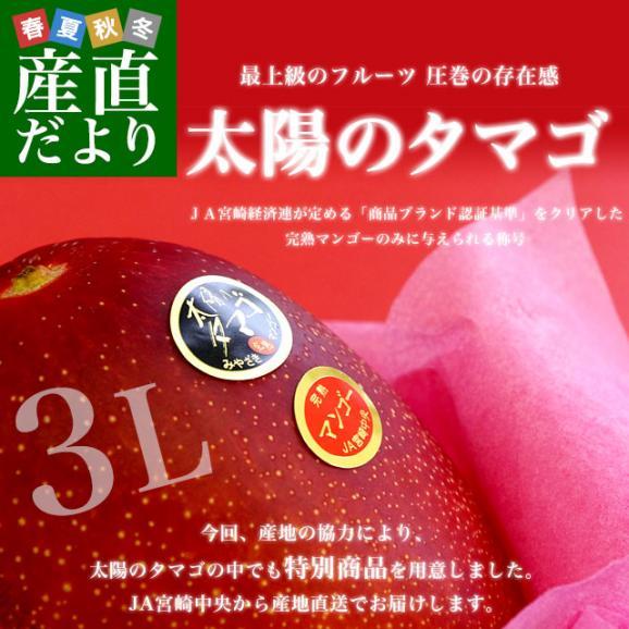 宮崎県より産地直送 JA宮崎中央 太陽のタマゴ 最高級AA品 3L×2玉 (450gから509g×2玉) 送料無料 マンゴー たいようのたまご02