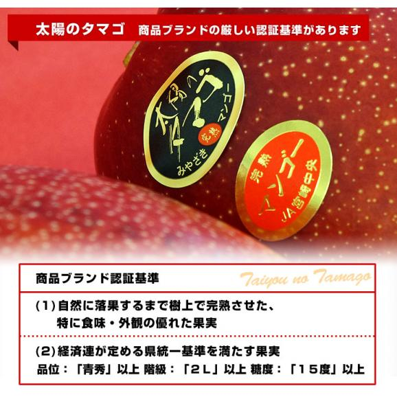 宮崎県より産地直送 JA宮崎中央 太陽のタマゴ 最高級AA品 3L×2玉 (450gから509g×2玉) 送料無料 マンゴー たいようのたまご04