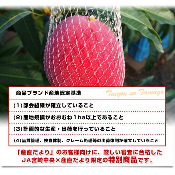 宮崎県より産地直送 JA宮崎中央 太陽のタマゴ 最高級AA品 3L×2玉 (450gから509g×2玉) 送料無料 マンゴー たいようのたまご05
