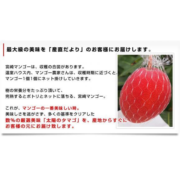宮崎県より産地直送 JA宮崎中央 太陽のタマゴ 最高級AA品 3L×2玉 (450gから509g×2玉) 送料無料 マンゴー たいようのたまご06