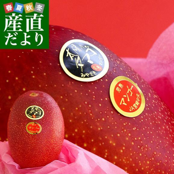 宮崎県より産地直送 JA宮崎中央 太陽のタマゴ 最高級AA品 5Lサイズ (650g以上×1玉) 送料無料 マンゴー たいようのたまご01