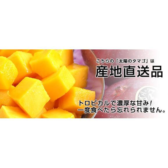 宮崎県より産地直送 JA宮崎中央 太陽のタマゴ 最高級AA品 5Lサイズ (650g以上×1玉) 送料無料 マンゴー たいようのたまご05