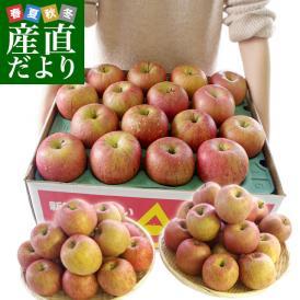 年末特別価格 青森県より産地直送 青森県産のサンふじりんご 約10キロ(28から36玉前後)