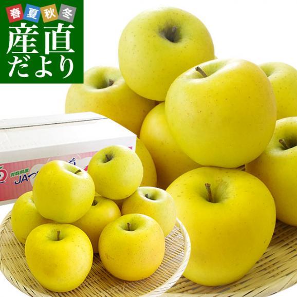 青森県より産地直送 JAつがる弘前 シナノゴールド CA貯蔵品 約3キロ(9玉から13玉)送料無料 りんご しなのごーるど01