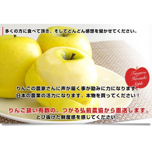 青森県より産地直送 JAつがる弘前 シナノゴールド CA貯蔵品 約3キロ(9玉から13玉)送料無料 りんご しなのごーるど05