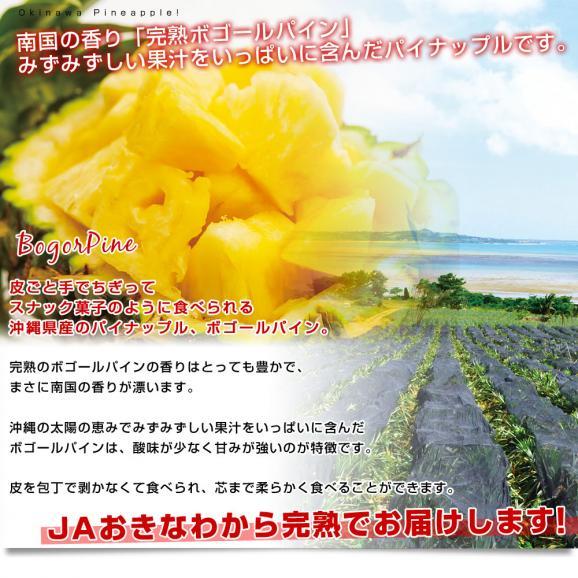 沖縄県より産地直送 JAおきなわ 石垣島産 ボゴールパイン 3玉セット 合計1.8キロ前後 (600g×3玉) 送料無料 沖縄パイン パイナップル パインアップル いしがきじま04