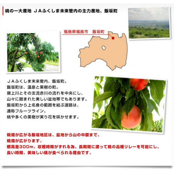 送料無料 福島県より産地直送 JAふくしま未来 ミスピーチ 秀品桃 約2キロ(7から9玉) もも05