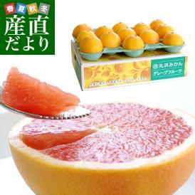 送料無料 静岡県より産地直送 丸浜グレープフルーツ スタールビー 約4キロ(10玉から15玉)