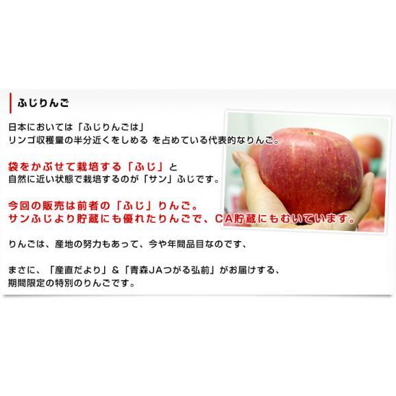 青森県より産地直送 JAつがる弘前 ふじ (有袋栽培) CA貯蔵品 約3キロ (9から13玉) 送料無料 りんご リンゴ 林檎04