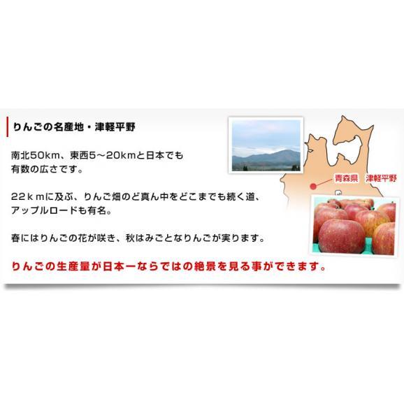 青森県より産地直送 JAつがる弘前 ふじ (有袋栽培) CA貯蔵品 約3キロ (9から13玉) 送料無料 りんご リンゴ 林檎05