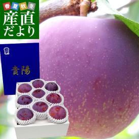 山梨県より産地直送 JAふえふき 富士見の貴陽 約1.5キロ (7玉から9玉) 送料無料 プラム ぷらむ