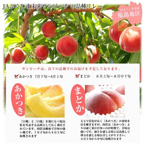福島県より産地直送 JAふくしま未来 最高級ブランド桃 「サンピーチ」3キロ(9から11玉)05